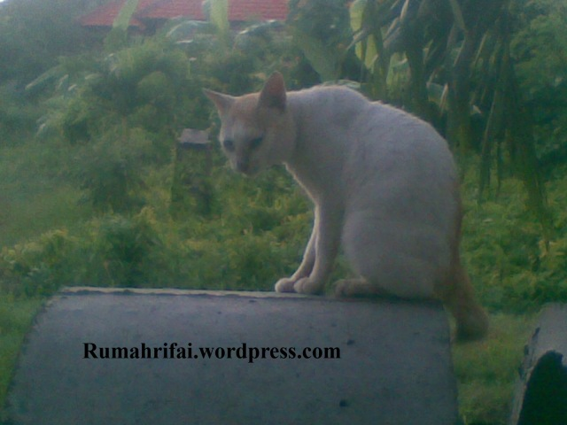 si Kucing lagi waspada takut disambit higheels sama Ninies
