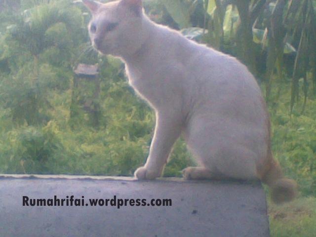 Kucing yang diadopsi Lala