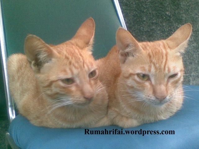 saudara kembar ya Puss??