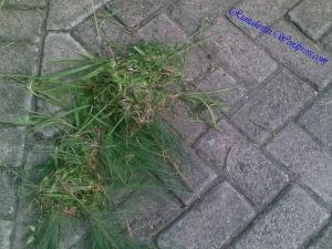 Hasil kerja gue cabutin rumput :p