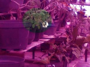 Green house juga, tuh ada bunga mawar putihnya. KYAAA :D