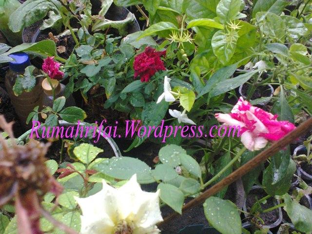 """""""liat kebunku.. penuh dengan bunga.. syalalalala"""" :)"""