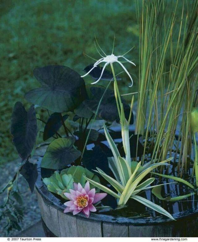 macam-jenis-tanaman-air-jenis-dan-macam-tanaman-air-tawar